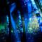 楽園のアクアリウム 2015 WINTER