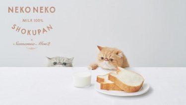 Samasnsa Mos2、Samansa Mos2 Lagom『ねこねこ食パン』と可愛いコラボレーション!5/14(金)発売